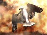 H3 Bird.jpg