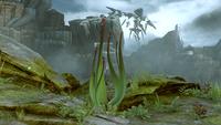 H5G - Aloe husk 1.png