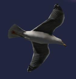 H2A-High Charity Bird.png