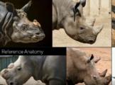 Rhinoreferences.PNG
