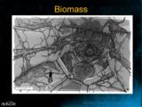 H3 - Flood biomass concept.png