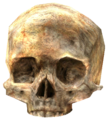 HCE-Skull.png
