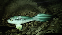 H2A Gravemind Fish.png