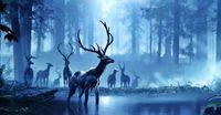 HI Deer.jpg