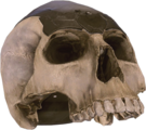 H5 Skull.png